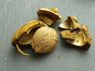 Il ne faut pas jeter les noyaux d'abricots : Photo de l'étape 1