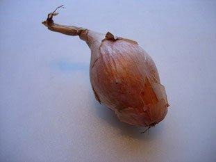 Comment préparer un oignon ou une échalote : Photo de l'étape 1