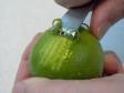 Comment prélever un zeste ou